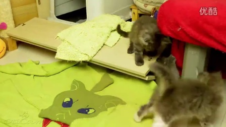 One minute from kittens life