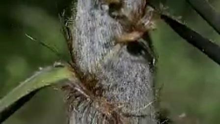 A002春笋生长与竹子竹林自然风光