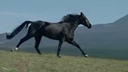 A031黑色骏马奔跑在山地唯美慢镜