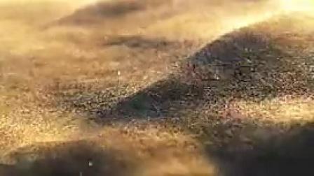 A015沙漠风沙流沙沙漠中的动物