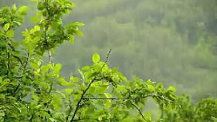 A024下雨山林中雨中植物唯美特写