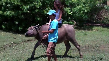 悠闲地骑水牛
