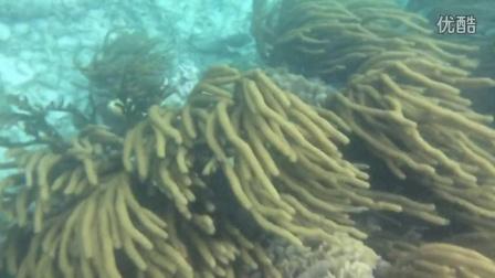 snorkel diving(浮潜)
