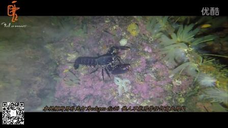 odepro div10深水补光拍摄视频