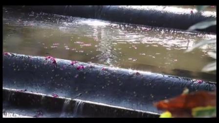 云山秋意——广外秋景实录   Autumn - Documentary of GDUFS
