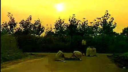河南南阳蝎子养殖基地(生态蝎子技术视频)