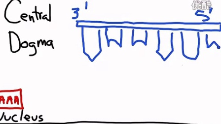 The Central Dogma- Transcription and Translation