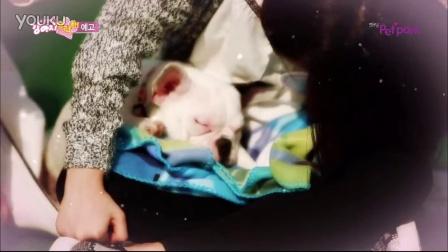 GFRIEND综艺 女朋友,请照顾好狗狗们!EP01预告