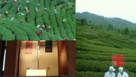三千茶农公司形象宣传片 茶叶加盟