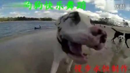 狗狗快乐舞蹈_flv
