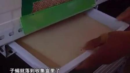 特种养殖技术之蝎子的养殖方法