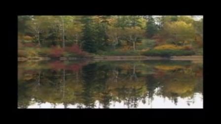 红尘情歌-紫斛