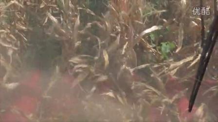 新时代玉米作业视频