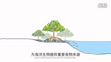 我们可以寄希望于红树林 #CMCN字幕组#
