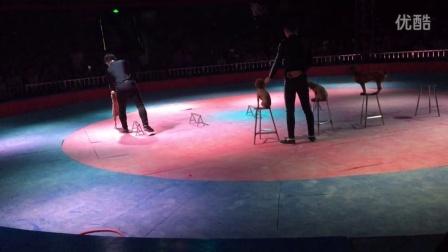 马戏团 训狗表演