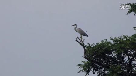 旅行记录—济州岛的鸟【第二部】