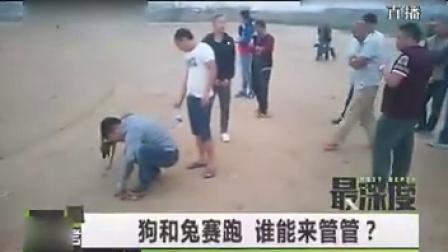 """0643--太残忍 郑州现""""狗兔赛跑""""赌局 兔子被撕碎"""