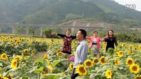 【拍客】向日葵
