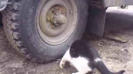"""【哇哈哦哦】逆天老鼠""""章鱼附体""""神级伪装依附在车轮险骗过大猫"""