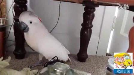 见过口才这么好的鹦鹉吗,和你吵个没完