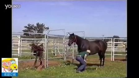 这匹马太有个性了,主人怎么也栓不上马鞍,无奈。【幽默搞笑 傻缺恶搞吐槽视频】