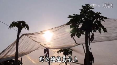 農夫與他的田20150615 - 大內高手木瓜