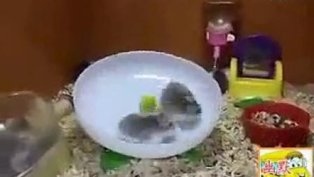 搞笑视频,看样子小仓鼠在转盘上得永远跑下去了,哈哈