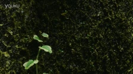 GREENDEEP格林德 植纤 新世代植物附生背景