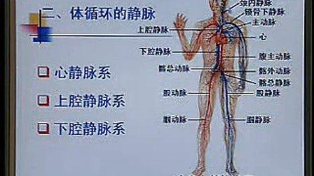 《系统解剖学》第26讲