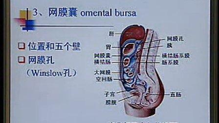 《系统解剖学》第19讲
