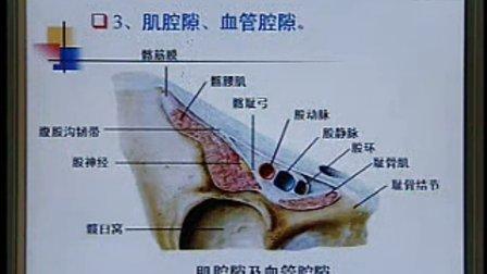 《系统解剖学》第11讲