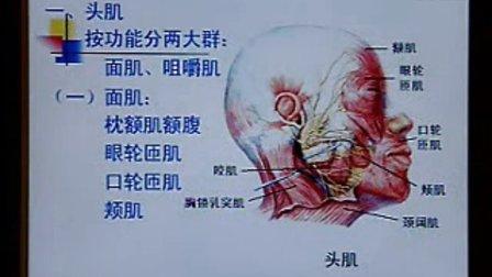 《系统解剖学》第08讲