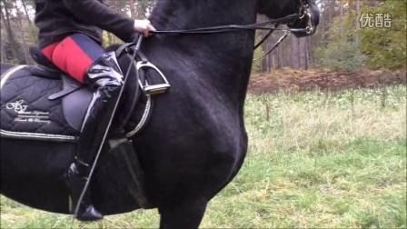 美女骑黑骏马