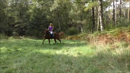 紫衣美女骑马