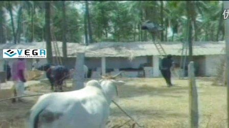 Nagarjuna's Kirayi Dada Telugu Full Movie