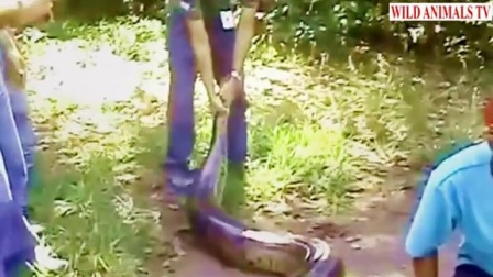 Giant Anaconda Snake Attacks Human Real In The AMAZON (Rare and Shocking