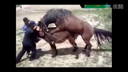 动物世界之世界 马驴一家