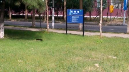 校园内偶遇小松鼠