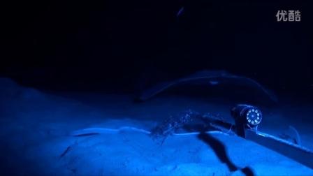 实拍新西兰深海海洋生物
