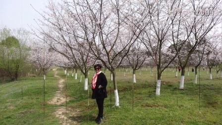 南京电台旅游大管家《天生桥植树》一日游