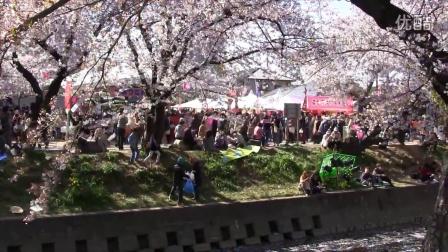 日本名古屋的樱花(4)  五条川