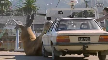 蠢萌象海豹闹脾气用身体砸游客汽车