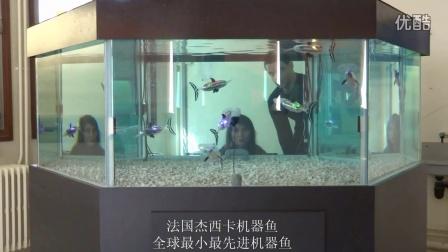 杰西卡机器鱼视频3