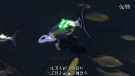 杰西卡机器鱼视频5