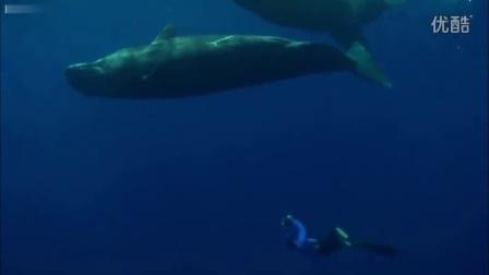 抹香鲸母子与潜水员游戏