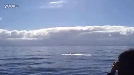泰国游客在凯库拉观鲸拍摄到的抹香鲸甩尾