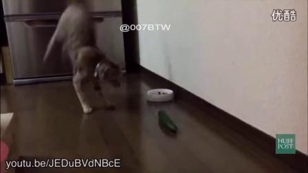 猫咪怕黄瓜吗?