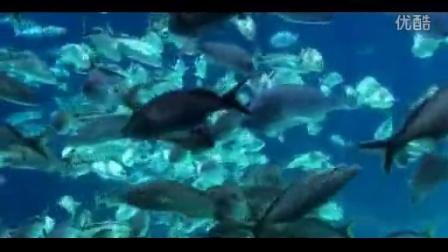 海洋游鱼 海里一大群的小鱼游来游去 鱼群游动动画动态视.