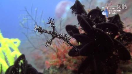 巴厘岛Blue Season Bali潜水中心介绍