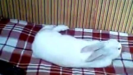 曾经养的兔子